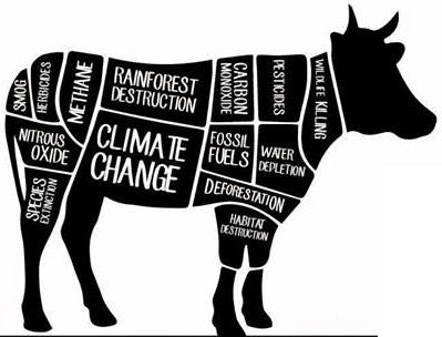 Does Meat REALLY Impact theEnvironment?