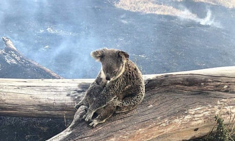The BushFire Crisis: Help HealAustralia